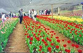 Inicia tu propio negocio de Floricultura