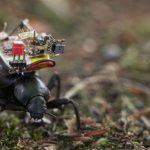 Una pequeña cámara para espiar el mundo de los insectos